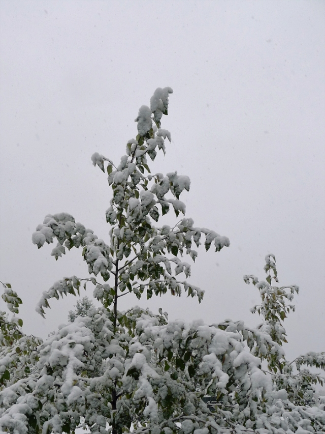 snowseptember2