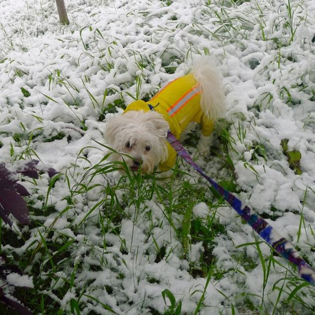 snowseptember4