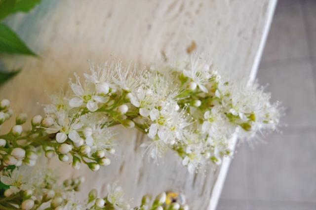 flowershop5
